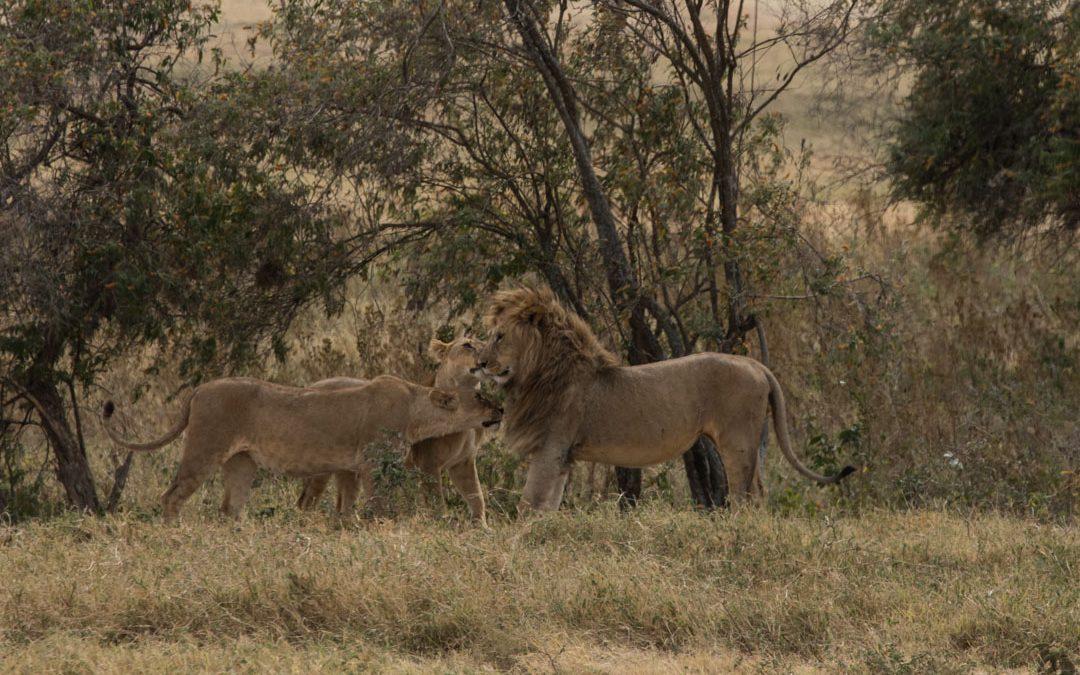 Ngorongoron kraatteri