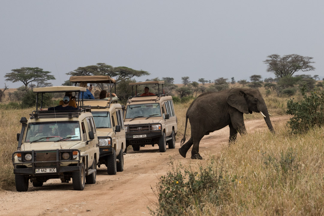 norsu Serengetissä