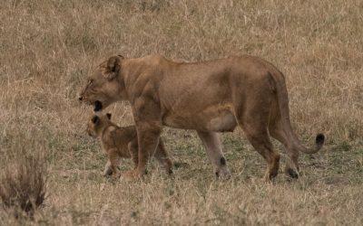 Serengetin kansallispuisto