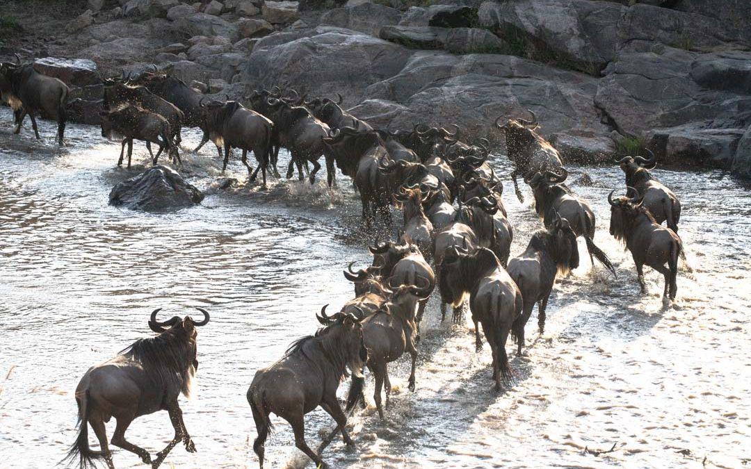 Upea suuri vaellus Masai Marassa