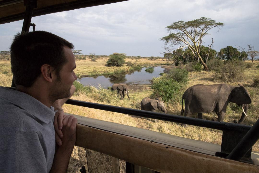 norsuja katsomassa Serengetissä Tansaniassa