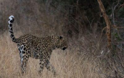 Toinen uskomaton päivä Krugerin kansallispuistossa