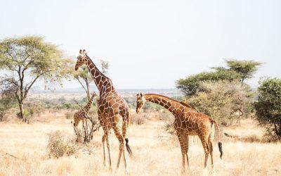 Samburun kansallispuisto Keniassa