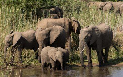 Vinkit omatoimiselle safarille Krugerissa