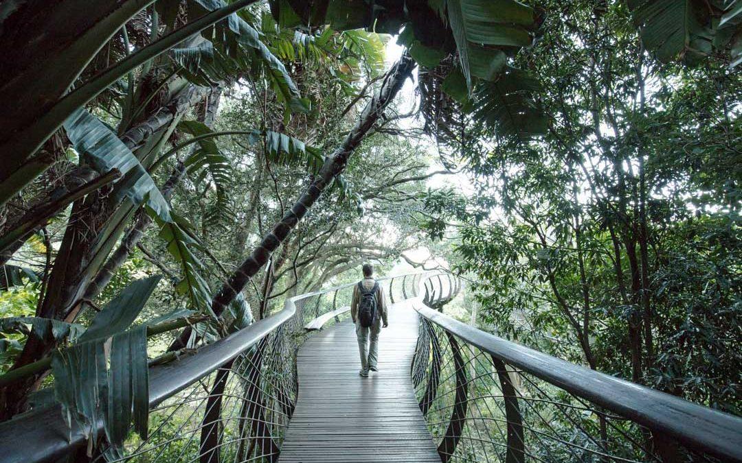 Kirstenbosch – yksi maailman upeimmista kasvitieteellisistä puutarhoista