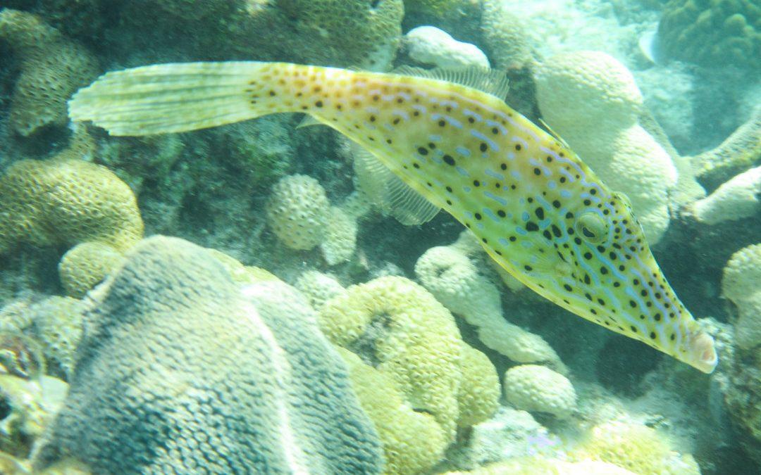 Sikojenlahti – snorklausta historian havinassa