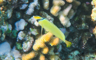 Great Barrier Reef – maailman suurin koralliriutta