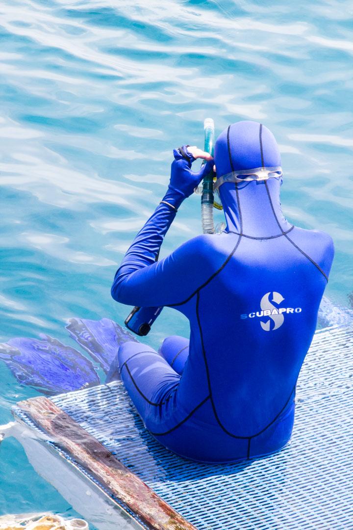 Australia, Great Barrier Reef, Iso valliriutta, snorklaus