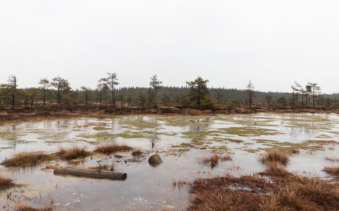 suo talvella Torronsuon kansallispuistossa Tammelassa Kanta-Hämeessä Suomessa