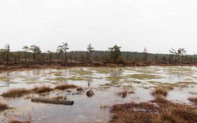 Torronsuon kansallispuisto – upea luontokohde Kanta-Hämeessä