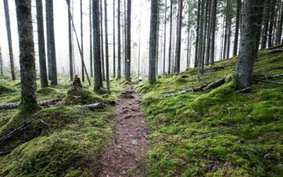 Liesjärven kansallispuisto – satumainen sammalmetsä Kanta-Hämeessä