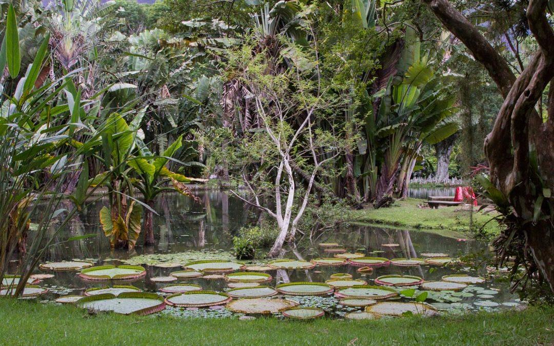 Karvaisia kummajaisia Rio de Janeiron kasvitieteellisessä puutarhassa
