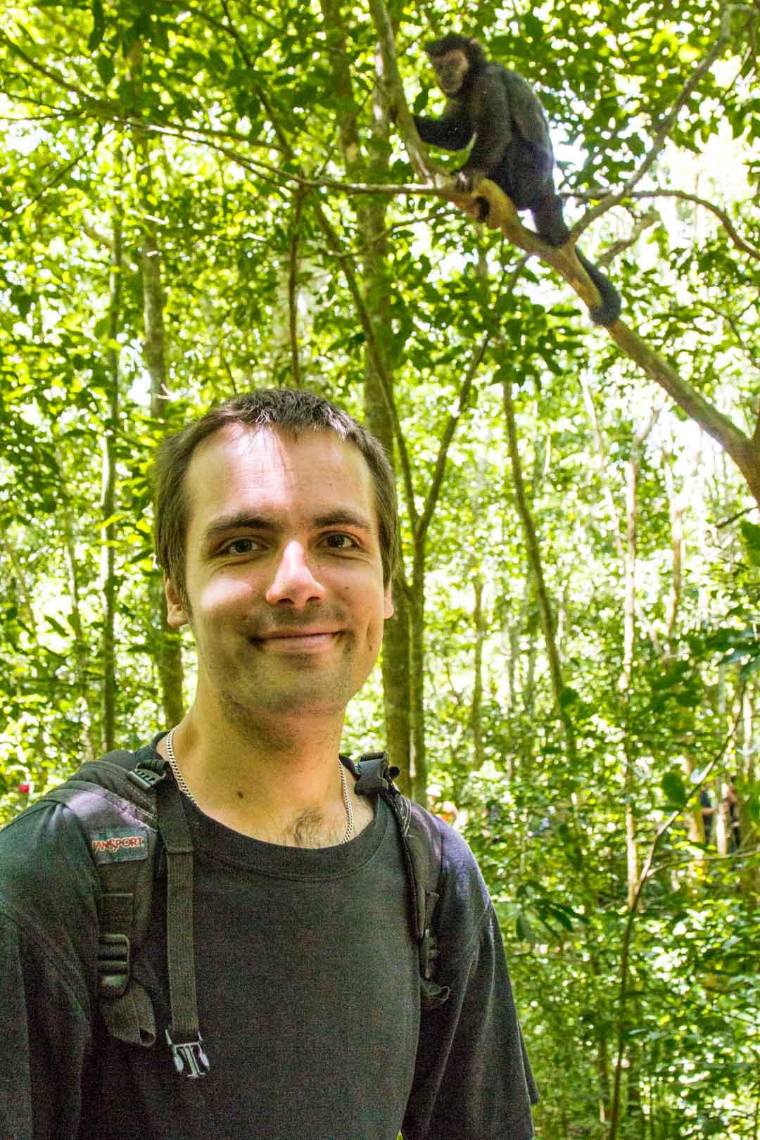 kapusiiniapina Iguassun vesiputouksilla Argentiinassa