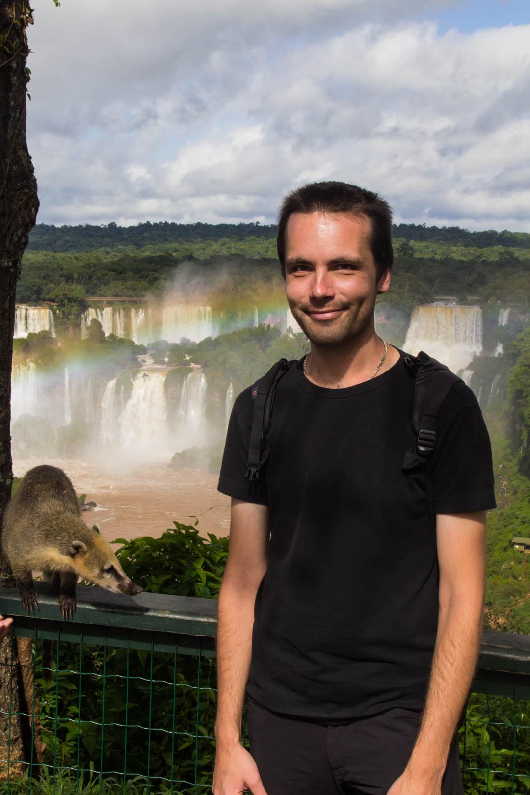 nenäkarhuja Iguassun vesiputouksilla Brasiliassa