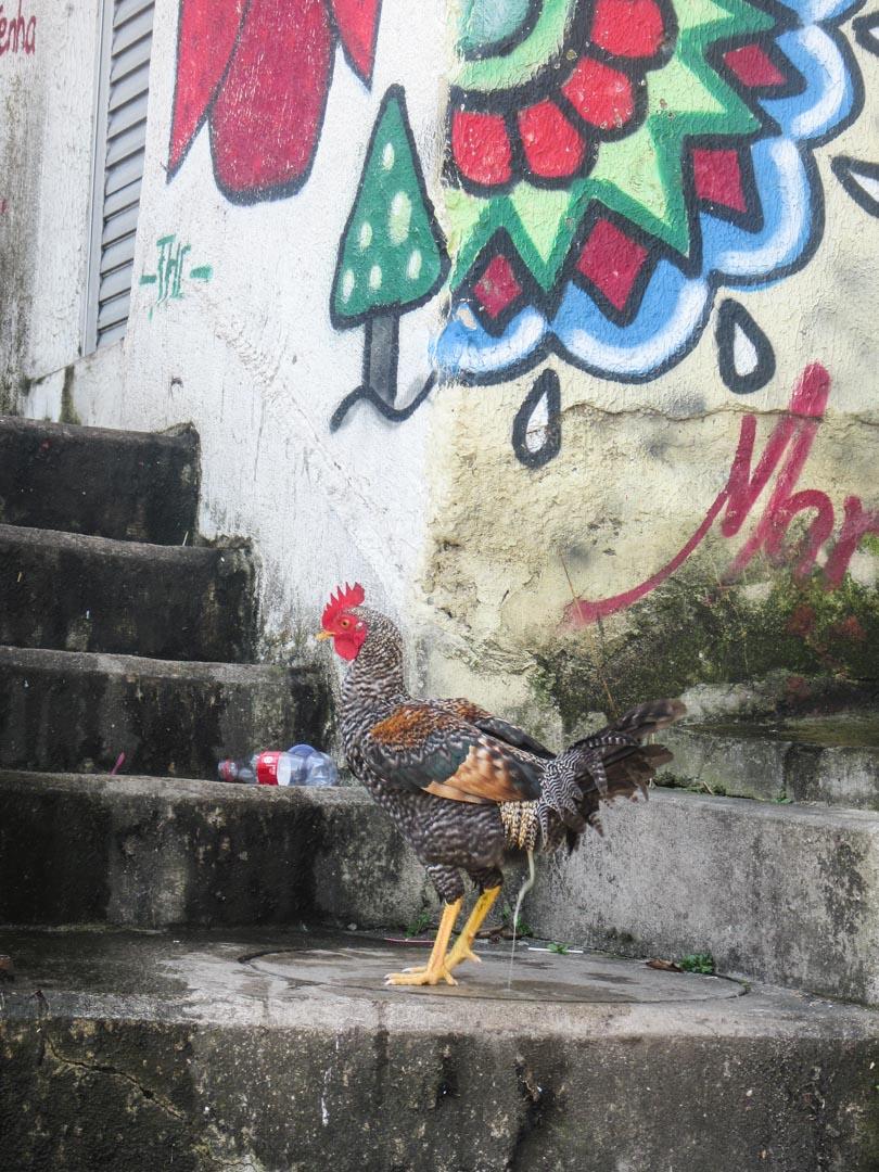 kukko favelassa Rio de Janeirossa Brasiliassa