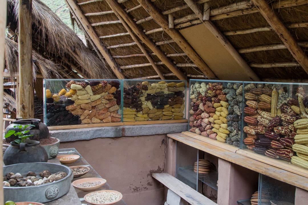 maisseja Perussa Pyhässä laaksossa lähellä Cuzcoa