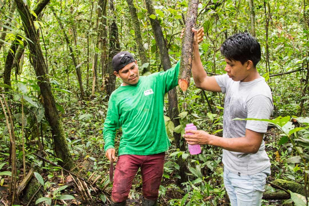 vettä hakemassa Amazonin sademetsässä