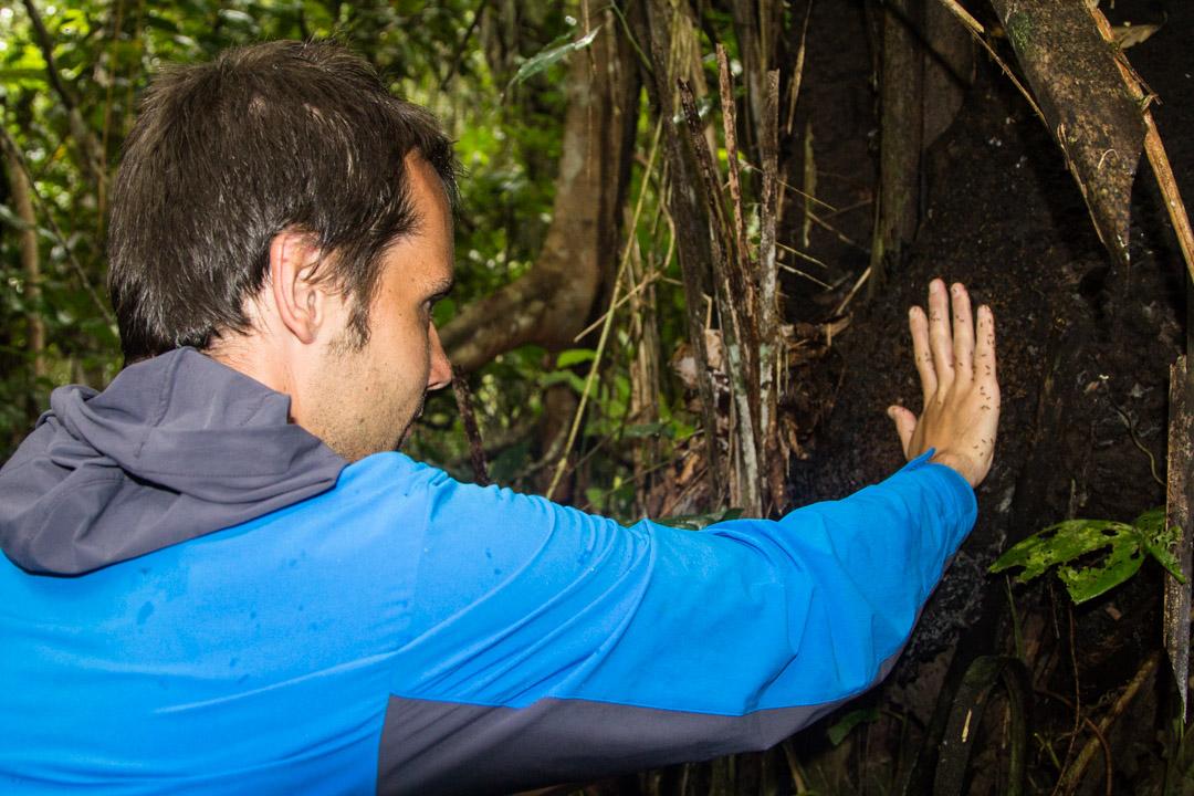 termiittejä Amazonin sademetsässä