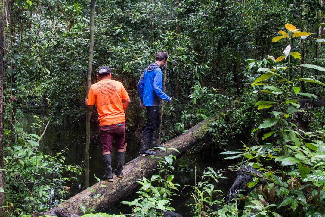 kävelyllä Amazonin sademetsässä