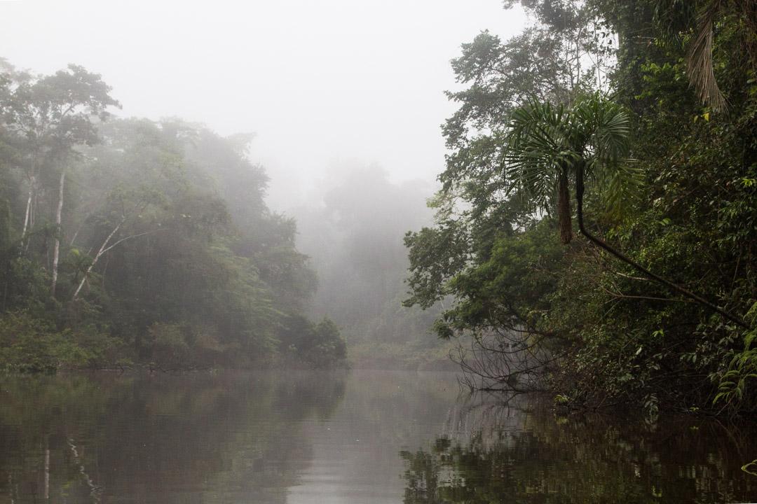 Amazonin sademetsä