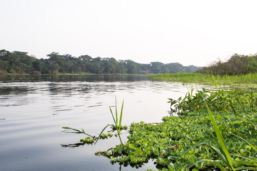 veneretki Amazonin sademetsään