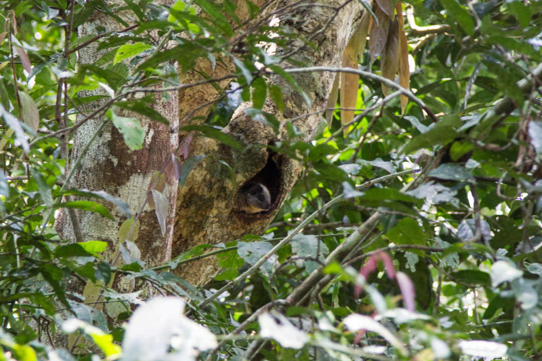 Amazonin sademetsän eläimiä