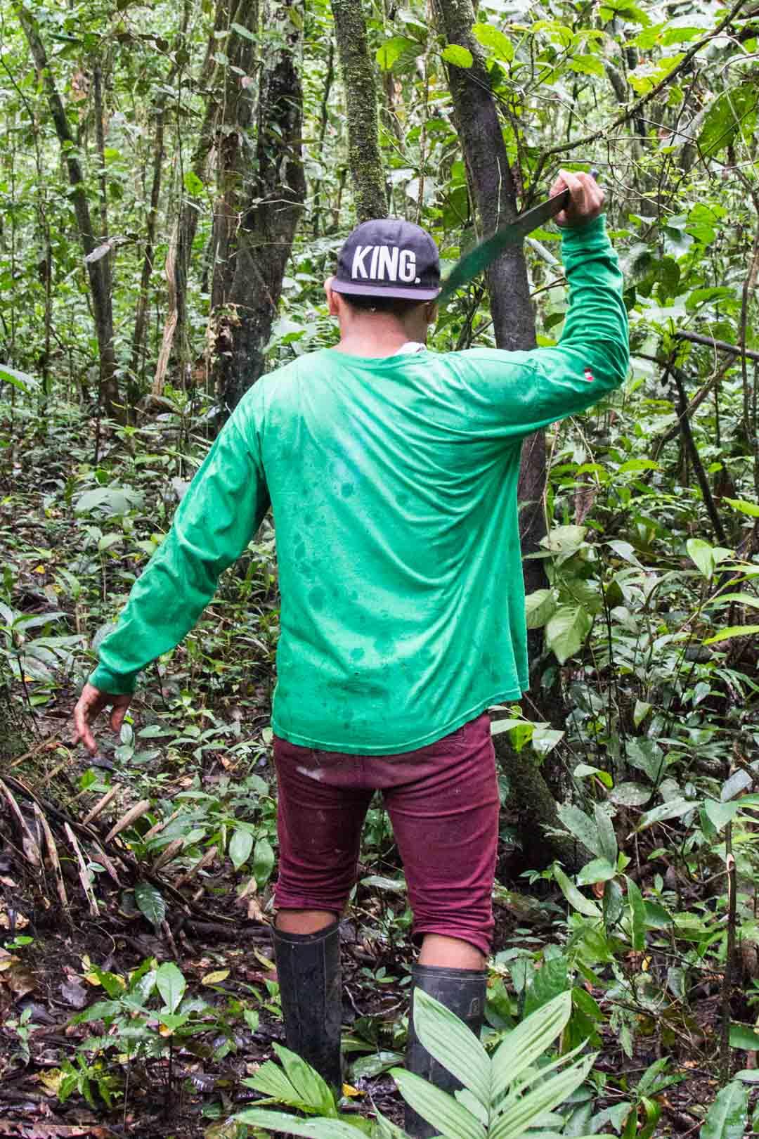 kävelyllä sademetsässä Amazonissa
