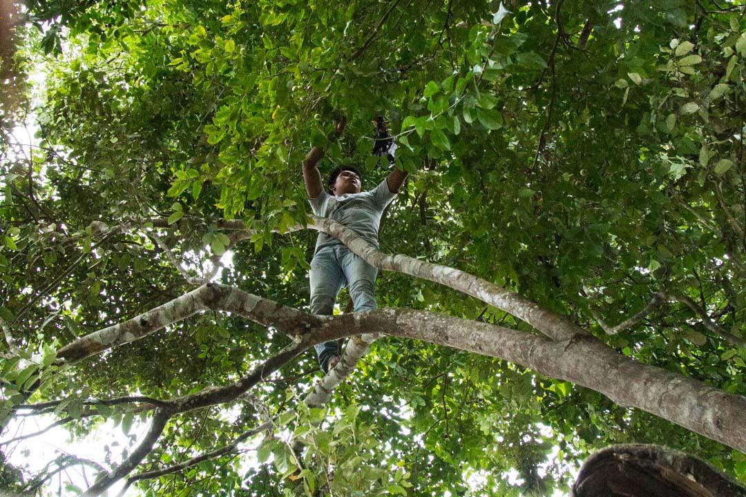 puuhun kiipeämistä Amazonin sademetsässä