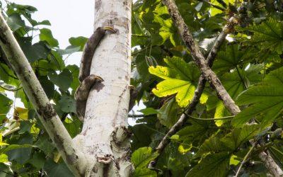 Erilaisia aktiviteetteja Amazonin sademetsässä