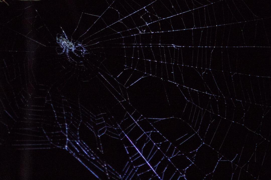 yökävelyllä Amazonin sademetsässä, hämähäkinseitti