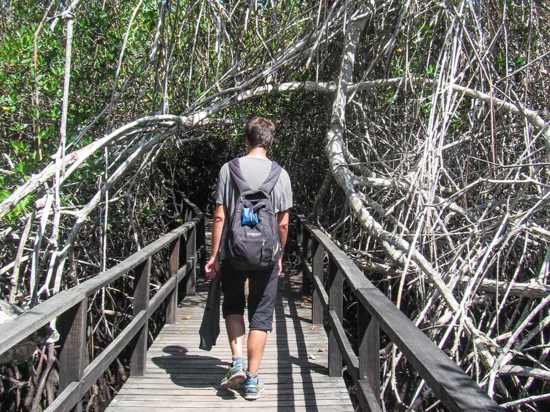 menossa snorklaamaan Isabela-saarella Galapagossaarella