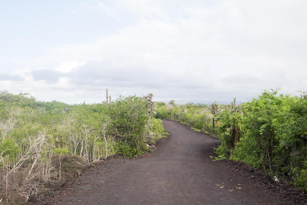 retki kosteikolle Isabela-saarella Galapagossaarilla