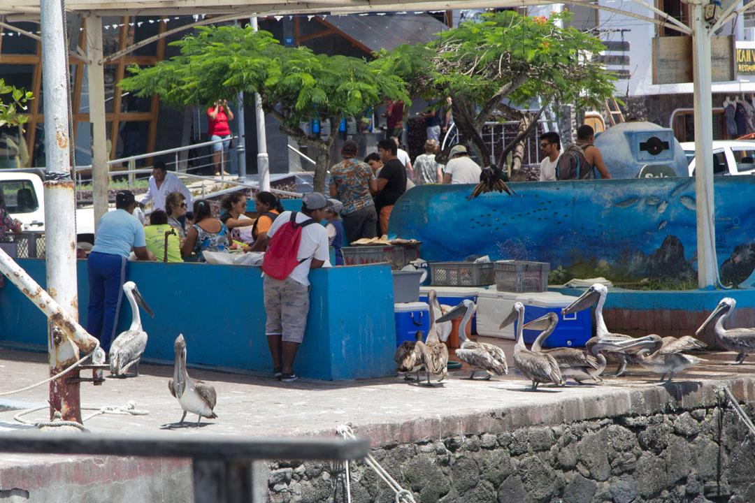 Puerto Ayoran kalamarkkinat Santa Cruz Galapagossaaret