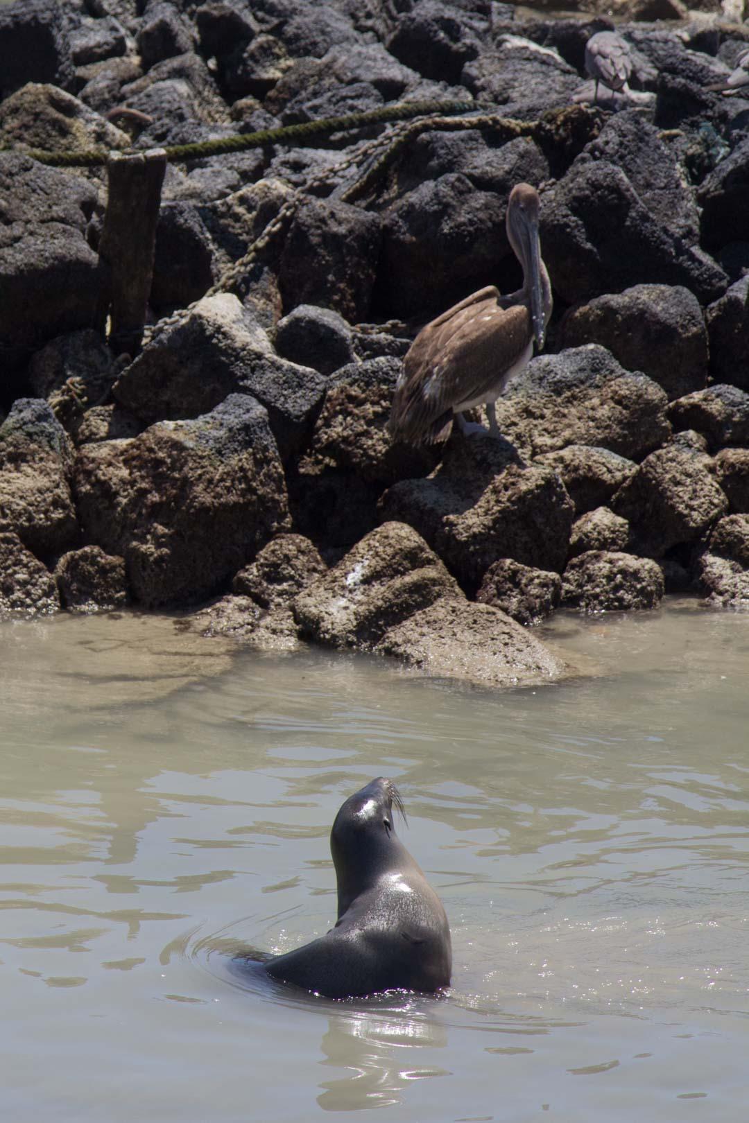 Galapagossaarten eläimiä