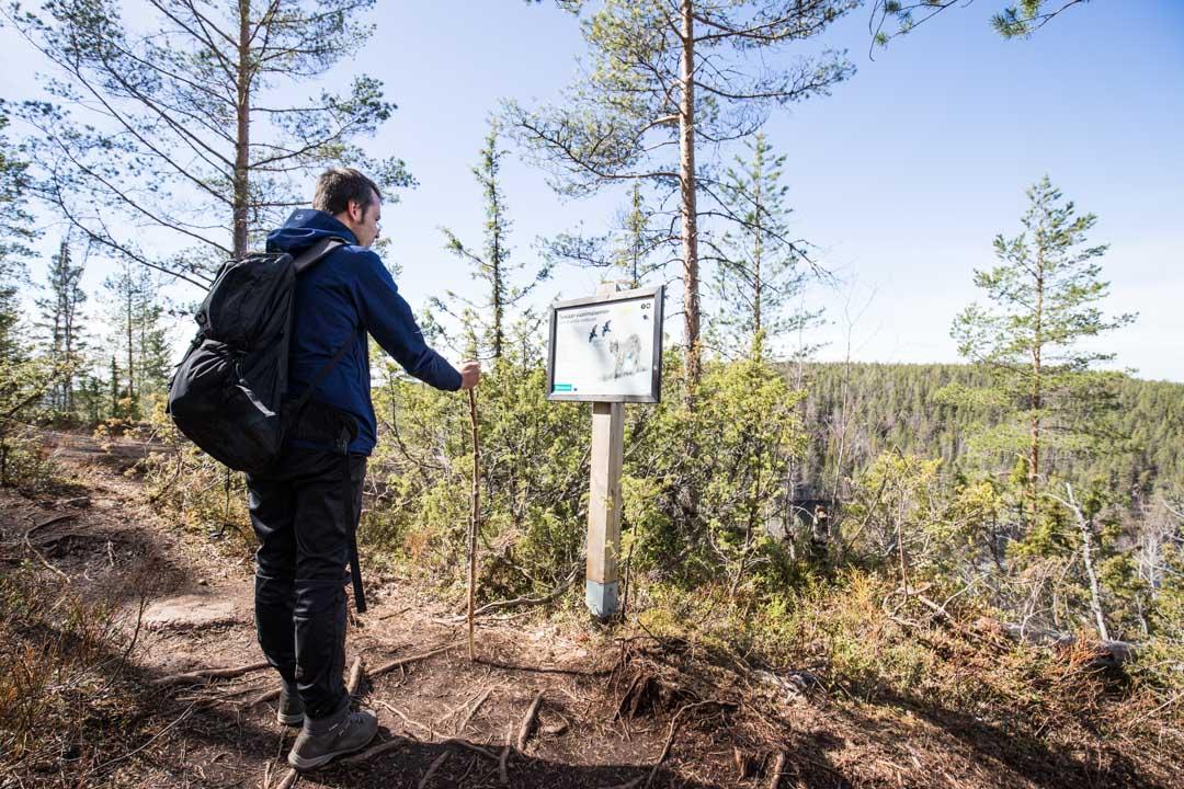 vaeltamassa Etelä-Konneveden kansallispuistossa, Vuori-Kalajan näköalapaikka