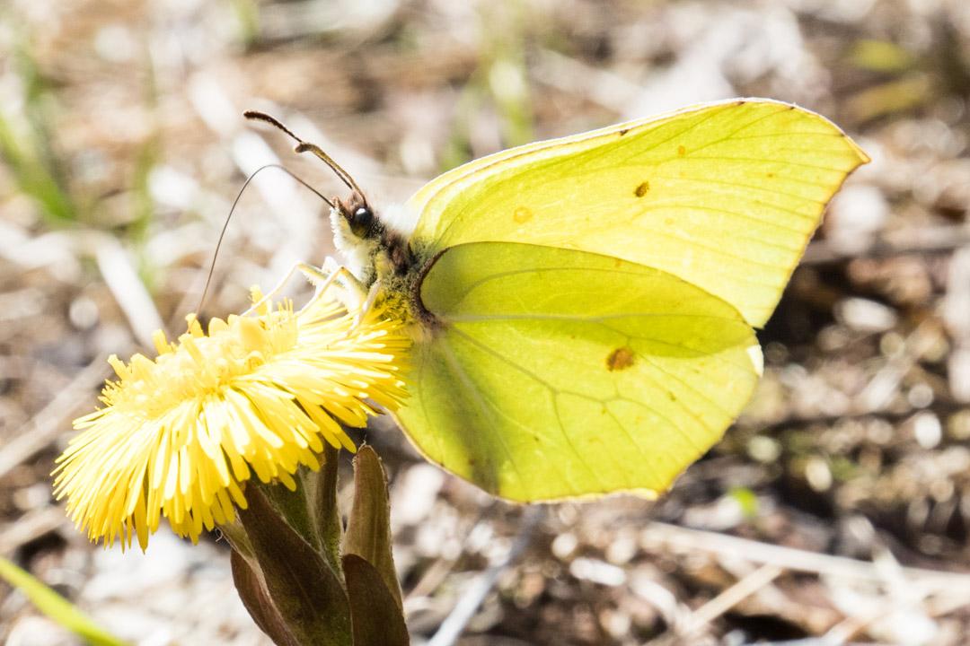 vaeltamassa Etelä-Konneveden kansallispuistossa, perhonen