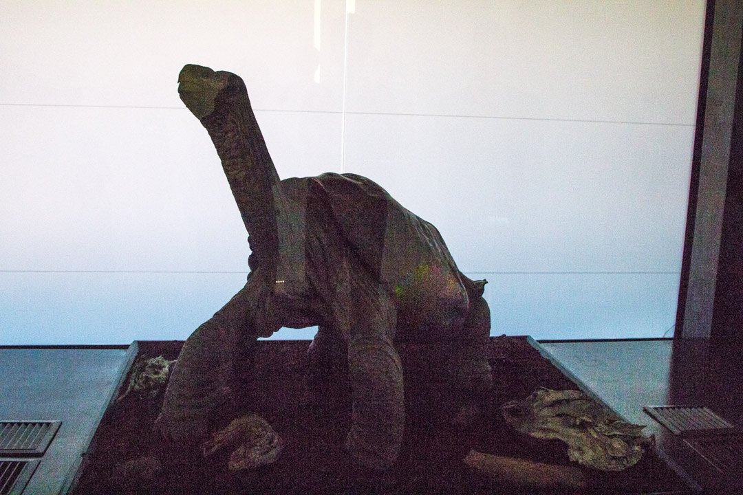 Yksinäinen Yrjö Charles Darwinin tutkimusasema Santa Cruz -saarella Galapagossaarilla