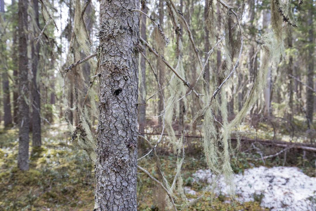 vaeltamassa Pyhä-Häkin kansallispuistossa