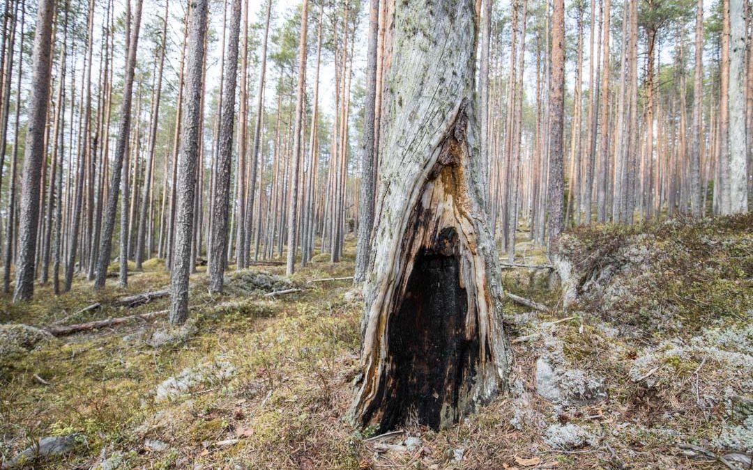 Pyhä-Häkin kansallispuisto – retki Etelä-Suomen vanhimpaan aarniometsään