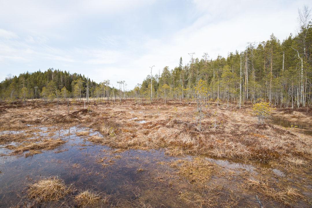 suolla vaeltamassa Pyhä-Häkin kansallispuistossa