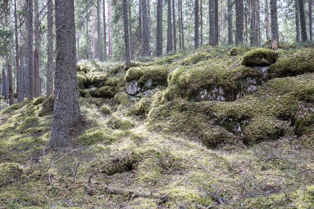 metsää Pyhä-Häkin kansallispuistossa