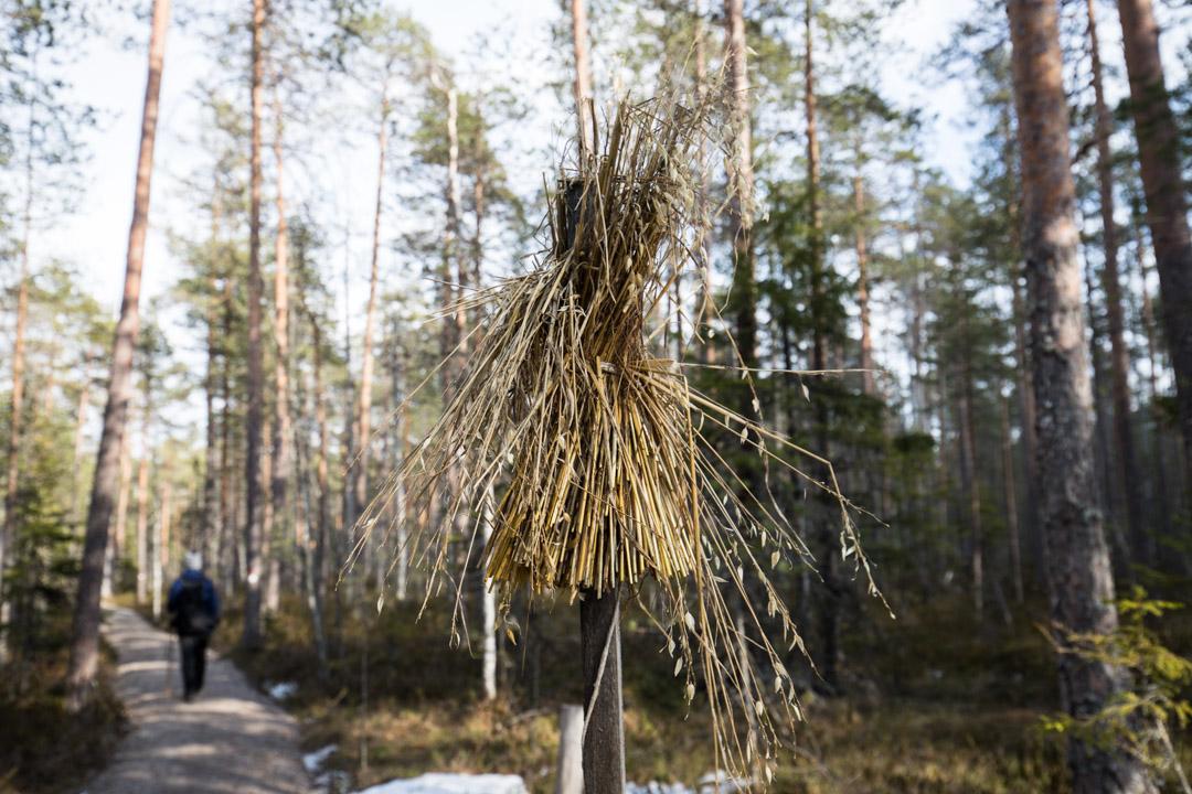 lintulyhde Pyhä-Häkin kansallispuistossa