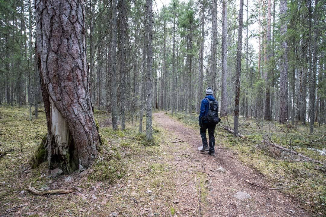 vaeltamassa suolla Pyhä-Häkin kansallispuistossa