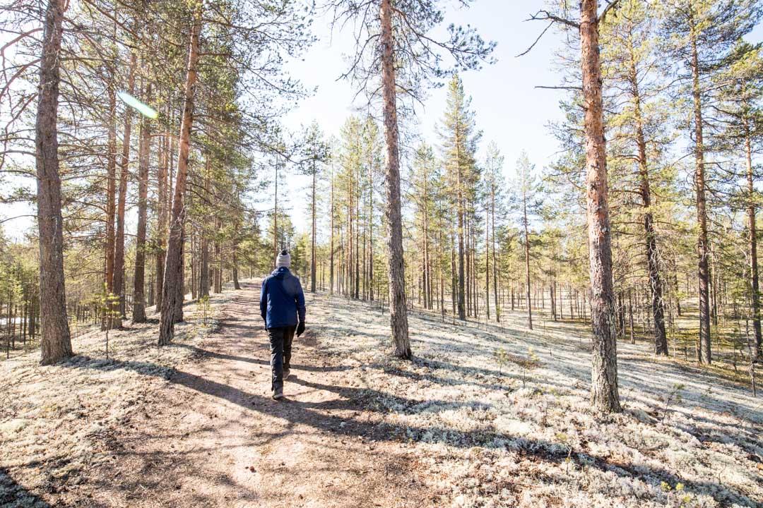 vaeltamassa Rokuan kansallispuistossa