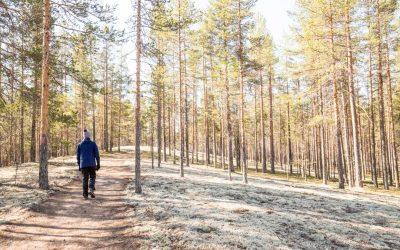 Rokuan kanssallispuisto – kaunis jäkälämattoinen kangasmetsä Pohjois-Pohjanmaalla