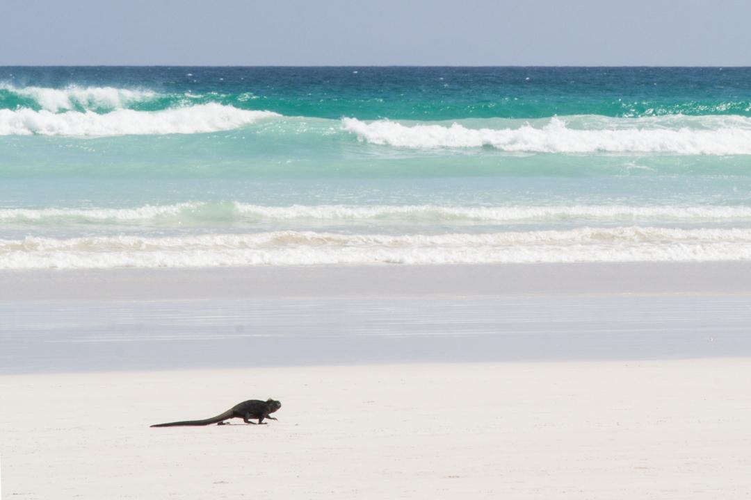 Tortuga Bayn ranta Santa Cruzin saarella Galapagossaarilla
