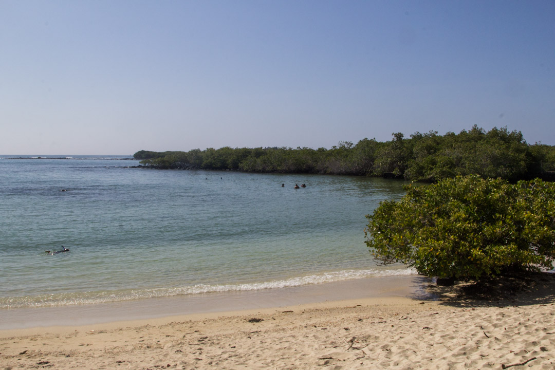 Santa Cruz -saaren uimarantaa Galapagossaarilla