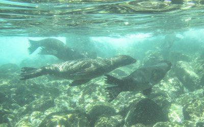 Galapagossaaret – upea päiväretki Santa Fe -saarelle