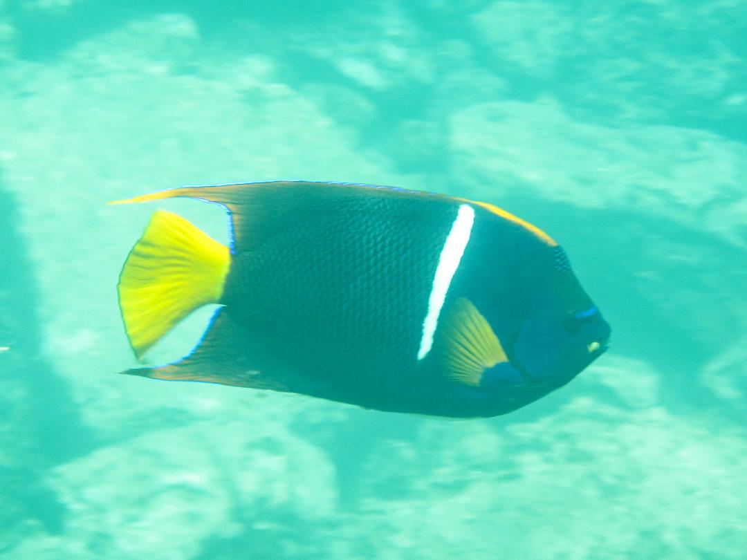 snorklaamassa ja kaloja katselemassa Santa Fen edustalla Galapagossaarilla