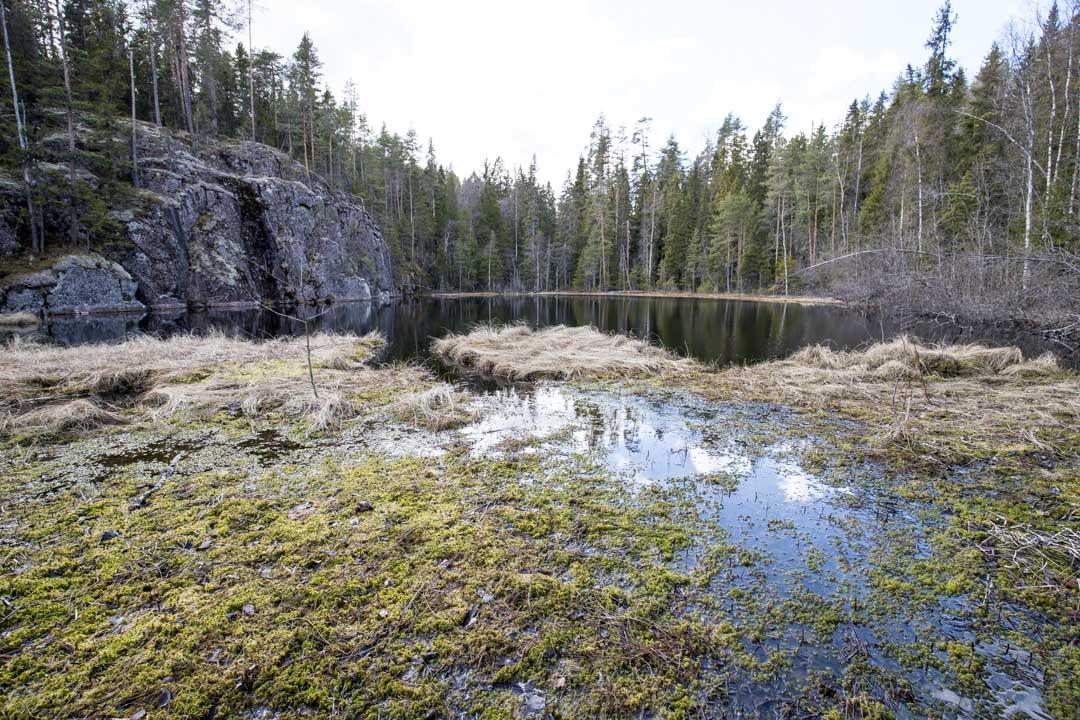 patikoimassa Haukan hiedalle Helvetinjärven kansallispuistossa